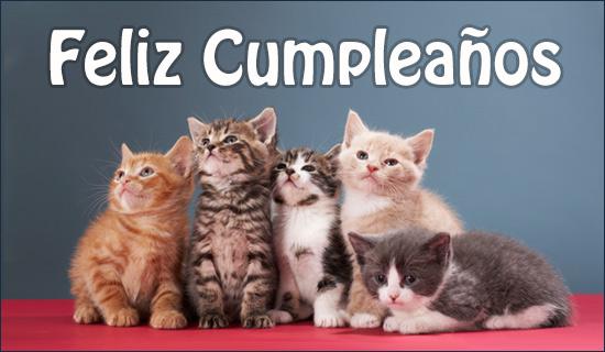 Feliz Cumpleaños Tarjeta Gato